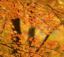 Fall admissions